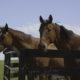 florida horse farm near ocala
